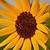 Link to Leica 90mm F4 Macro Elmar M Gallery